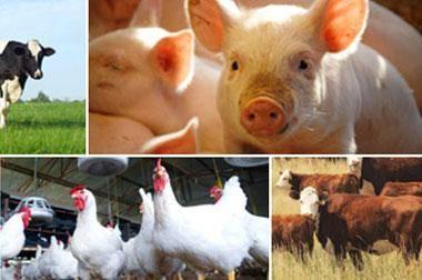 livestock dealer bonding
