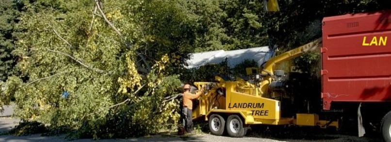 Company removing tree from clients backyard