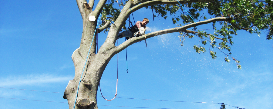 Tree removal trimming pruning contractor insurance